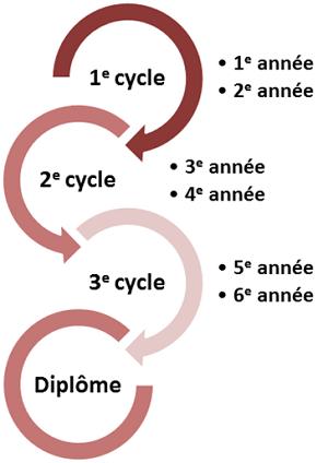 organisation formation etiopathie